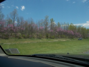 042614 Redbuds going home