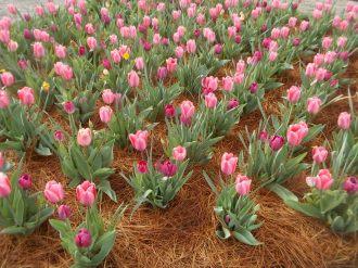 040116 Biltmore gardens (13).JPG