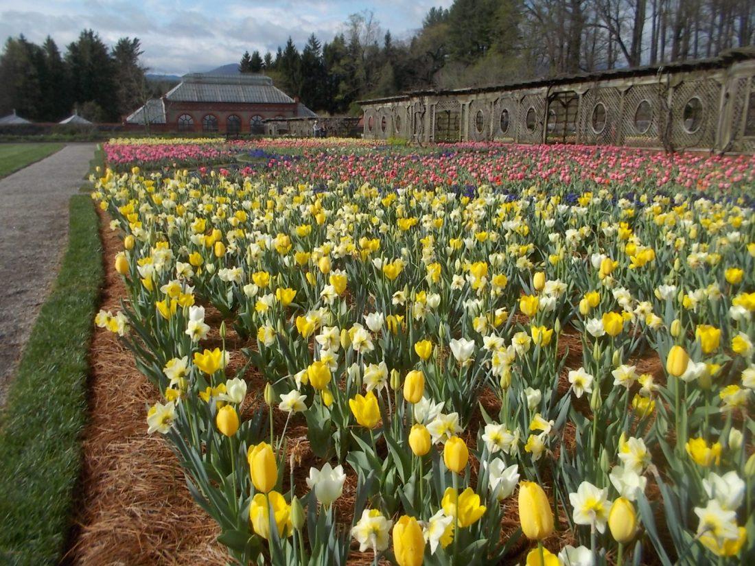 040116 Biltmore gardens (15).JPG