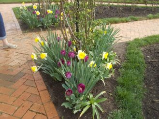 040116 Biltmore gardens (3).JPG