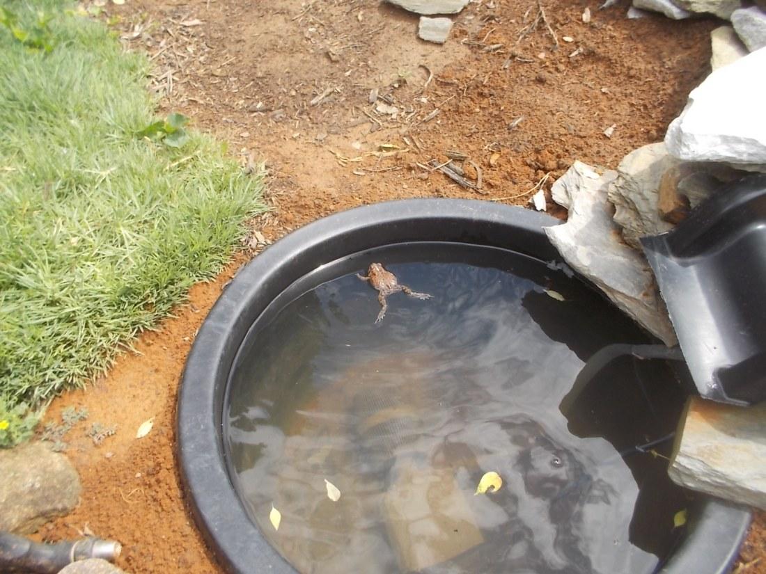 070916 Frog in the pool.jpg