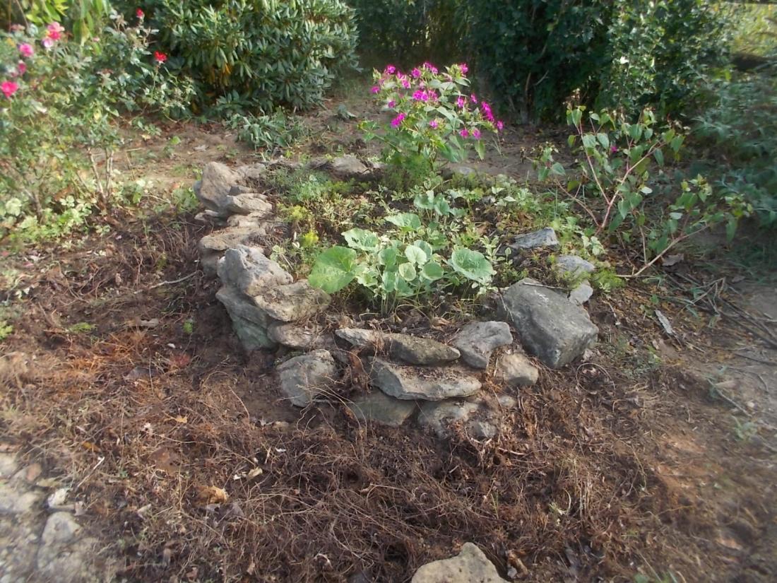 091316 Rock garden four o-clocks.JPG
