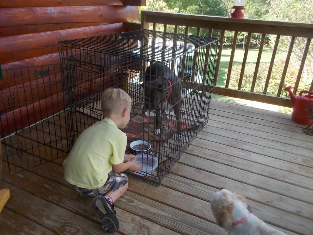 091916 Logan feeds dogs.jpg