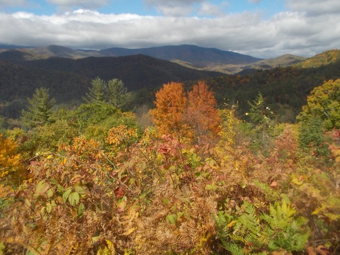 102216 Fall colors in Smoky Mnt Natl Park.jpg