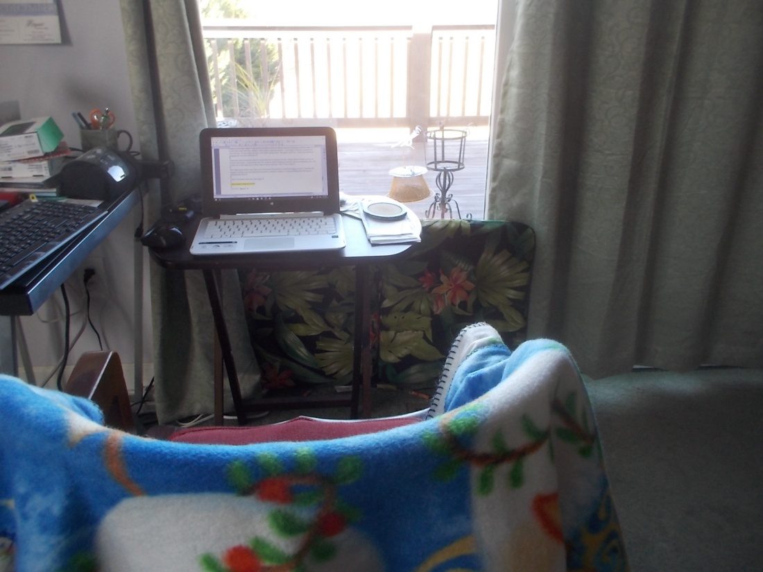 121516 My nest on a cold day.JPG
