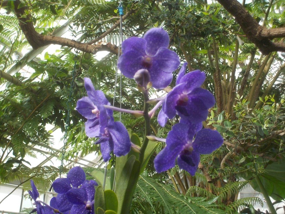 030817 D photo in greenhouse.jpg
