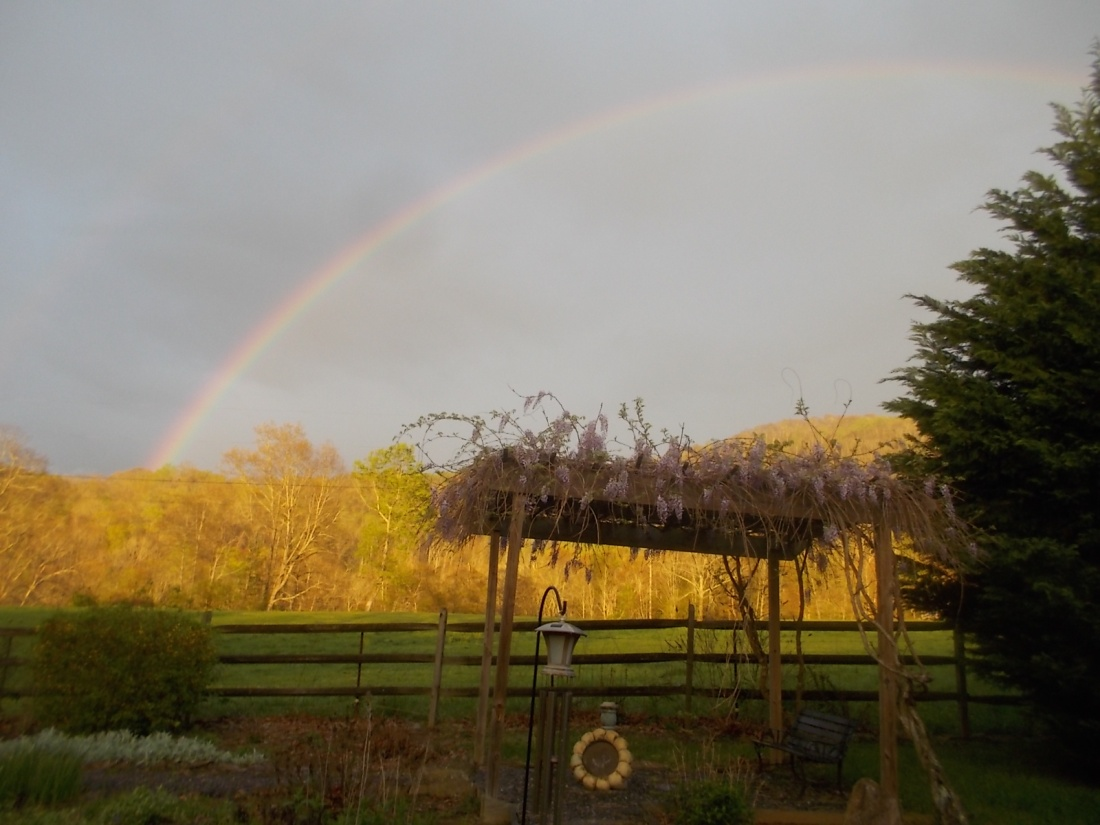 041917 Rainbow with wisteria blooms.jpg