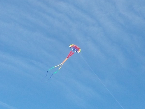 100117 Kite strolls through sky