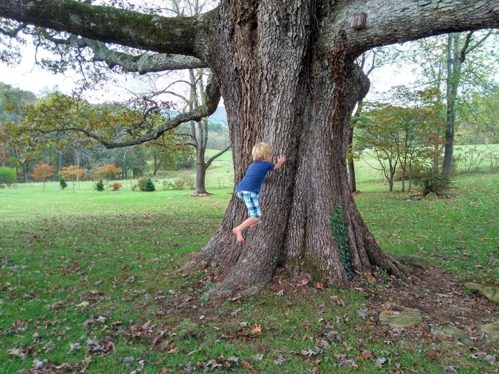 101017 Logan tries to run up the oak tree.jpg