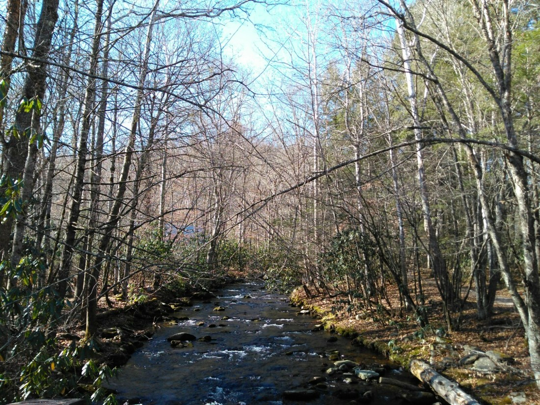 112917 Stream at Cataloochee.jpg