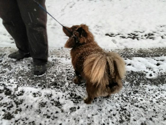120817 Albert in the snow.jpg