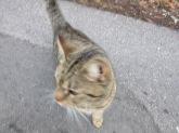 012218 Little Cat (2)