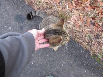 012218 Little Cat (3)