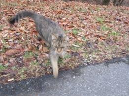 012218 Little Cat (4)
