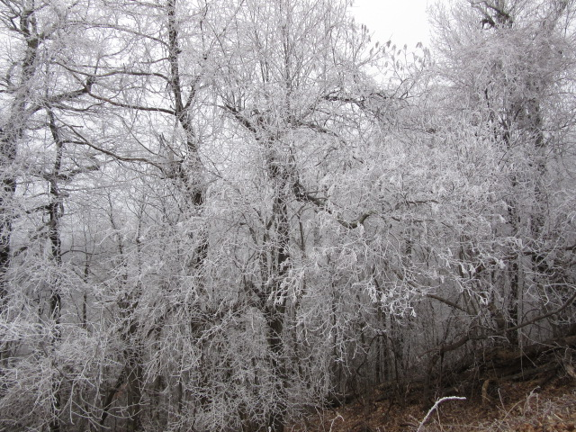 123117 Rime ice on Parkway.JPG