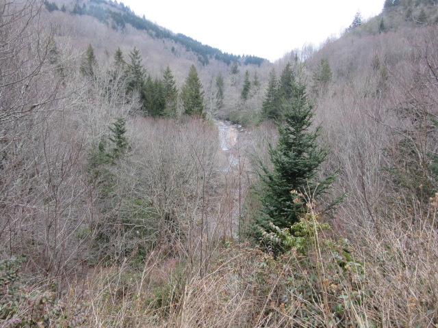 030518 (13) Bubbling Spring Branch Cascades.JPG