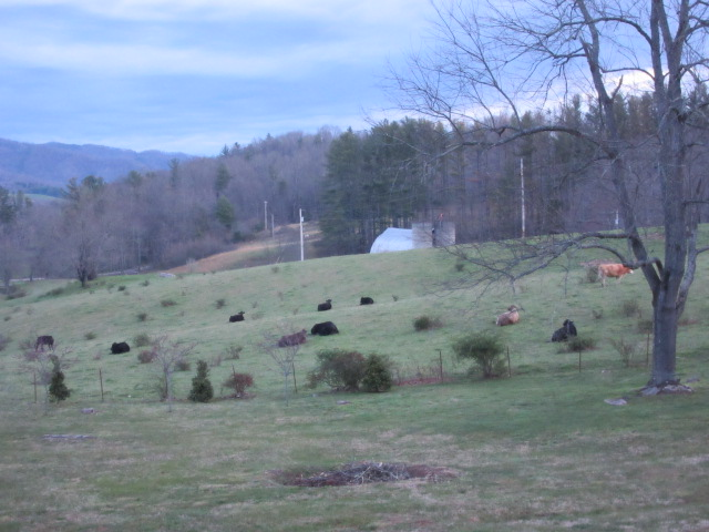 040118 Easter cows look toward sunrise.JPG