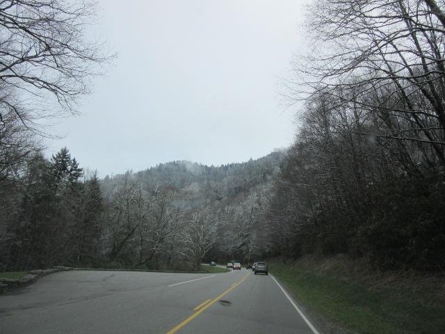 040818 (5) Ice on trees.JPG