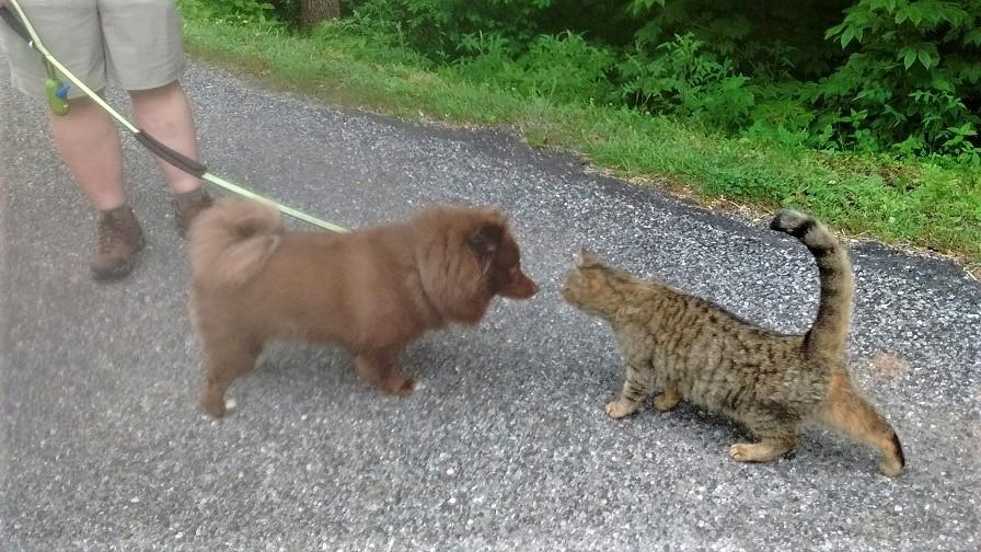 061318 Albert and Cat bump noses.jpg