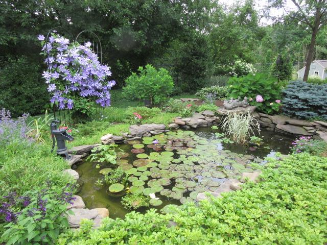 062218 Kate Crimmins pond.JPG