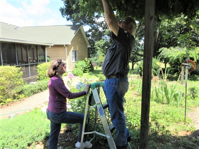 070918 War on Wisteria Kate hold ladder for John.JPG