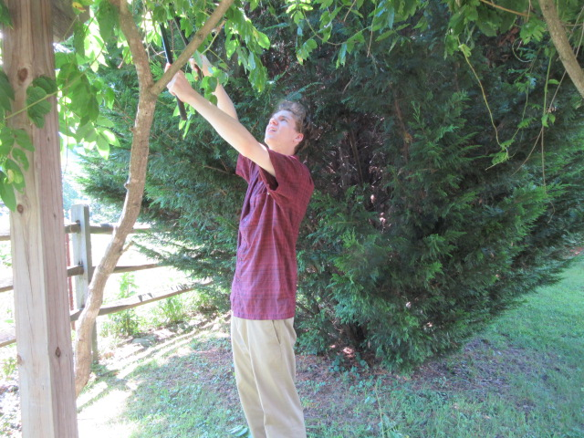 070918 War on Wisteria Nate whacks tendrils.JPG