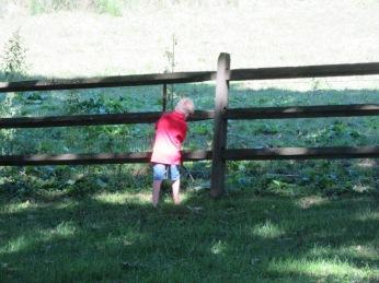 082318 Logan retrieves tennis ball from pasture