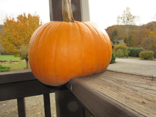 110218  Flabby Butt Pumpkin.JPG