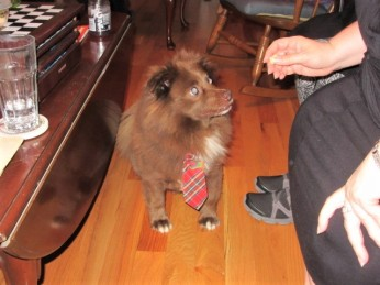 112218 14 Albert's Christmas tie on Thanksgiving