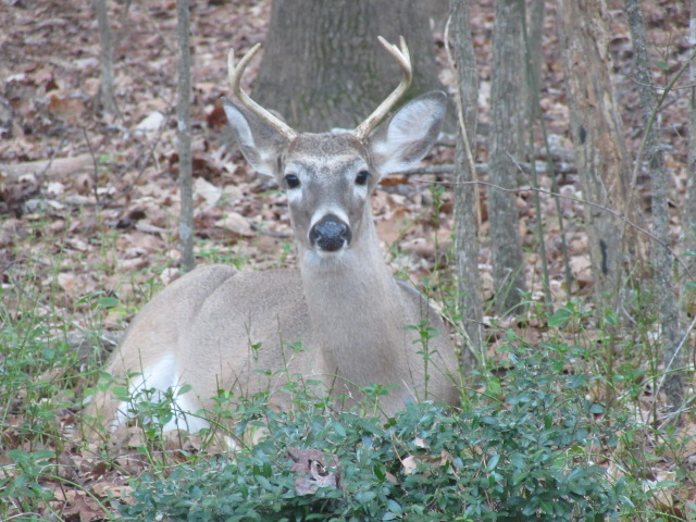 010519 Deer in Susan's backyard.JPG