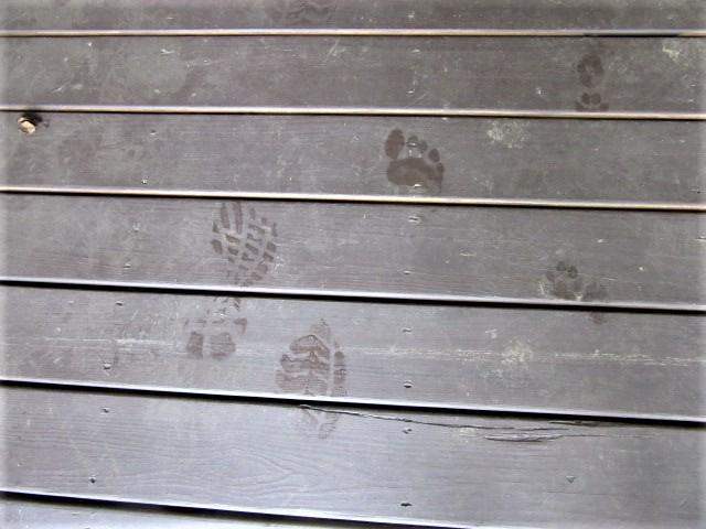 051719 $ shoe  Rose's barefoot Sadie's paw taking things inside house.JPG